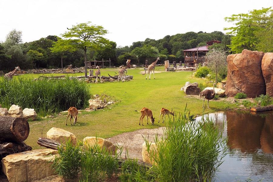 Kiwara Savanne im Zoo Leipzig