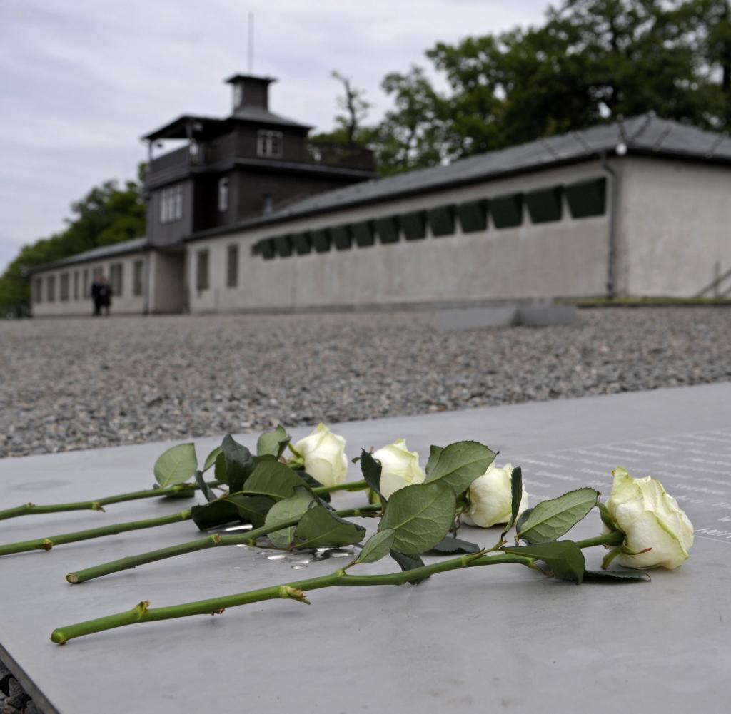 memorial Buchenwald rose